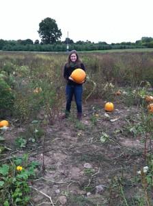Optimized-pumpkin picking